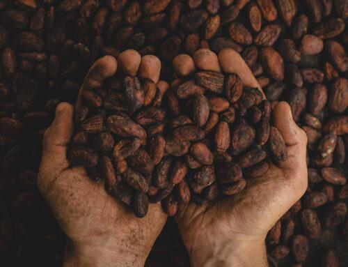 Cioccolato e cacao mantengono giovane il cervello